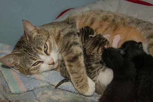 Pet mom (Photo: 0x01C / Wikimedia